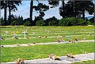 Photo of Ruru lawn cemetery