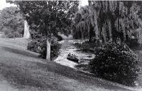Schoolboys rowing along the Avon River where it flows through the Botanic Gardens [193-?]