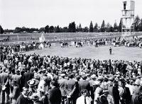 Horses parading in the ring at Riccarton Racecourse [ca. 1960]