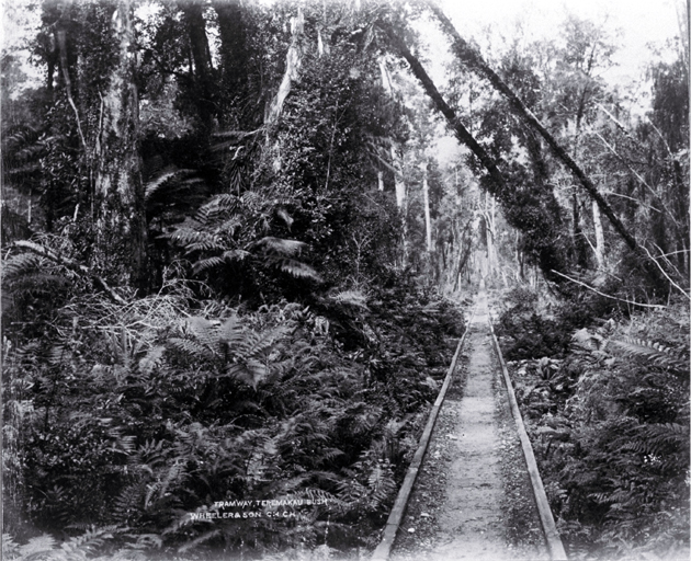 Wooden tramway tracks run through Taramakau bush between Greymouth & Kumara, Westland