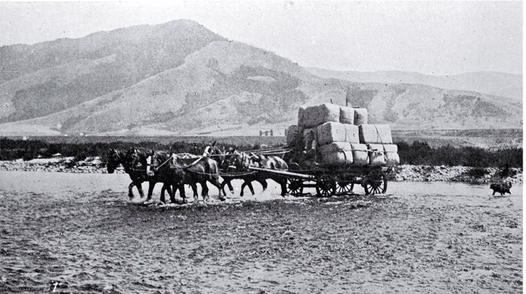 From sheep station to wool store a horse and wagon ford a stream getting a clip from the back country into the store.