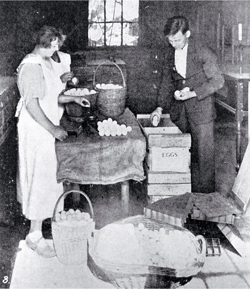 Poultry raising and egg production in Canterbury : stamping, weighing and packing eggs at Fazackerley's poultry farm, Sockburn, Christchurch.