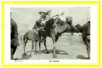 The camels