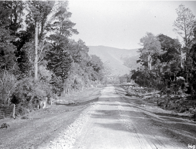 A road running through Peel Forest, South Canterbury
