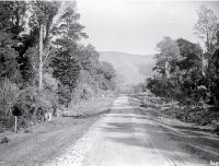 A road running through Peel Forest, South Canterbury [ca. 1900]