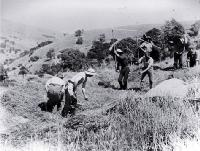 Grass seeders threshing, Banks Peninsula [ca. 1900]