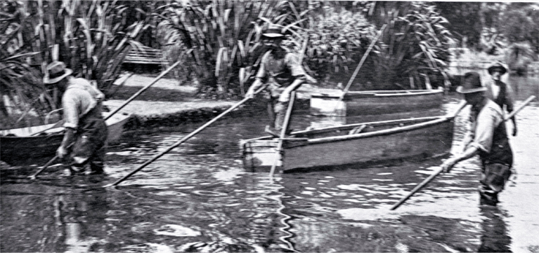 Clearing weed from the Avon River by wading and by punt, Christchurch