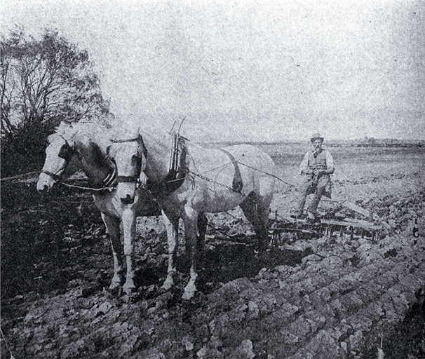 Ploughing with horses in the Lower Styx Road region