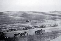Eight teams of horses being used to plough a 400 acre paddock in South Canterbury [1912]