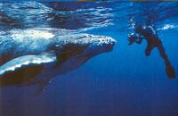 Kim Westerskov with a whale