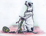 Knitting dog