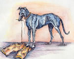 Trouser dog