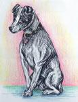 Littel dog