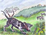 Cow dog