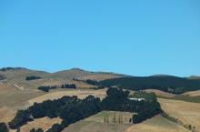 Manuka Pa Ridges, Photo by Tarlin Stirling, March 2014