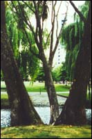 View through the trees of the square