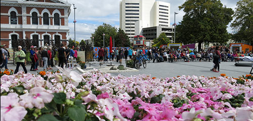 Photo of flowers in Cathedral Square
