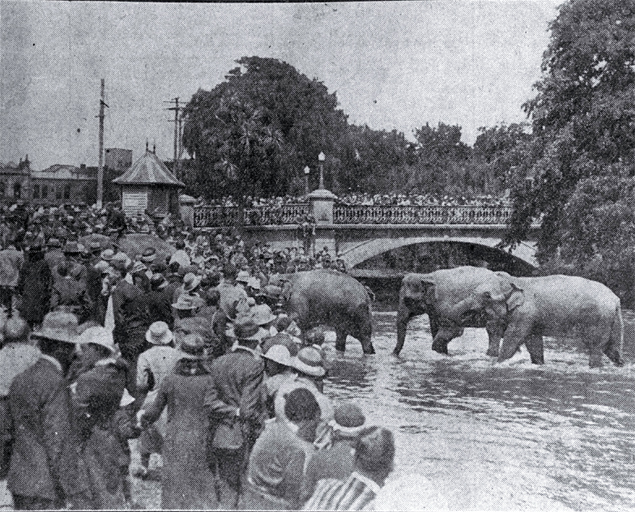 Circus elephants in the Avon River, Christchurch
