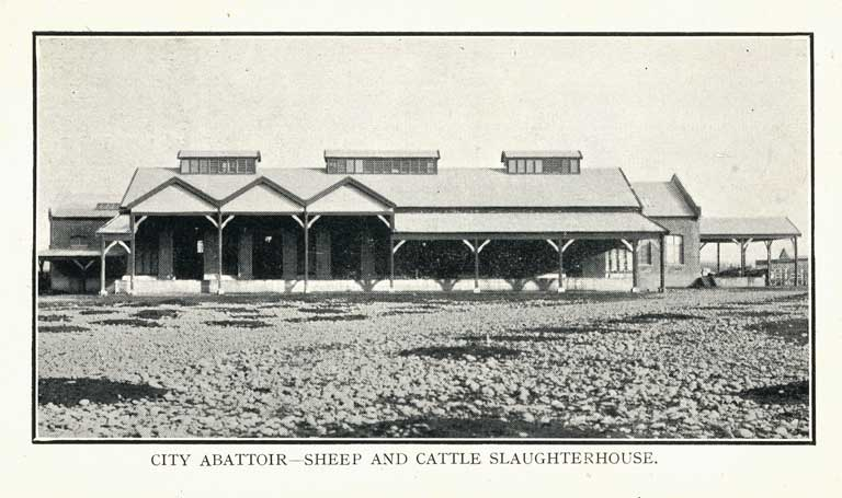City Abattoir - Sheep and Cattle Slaughterhouse [1906
